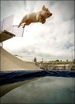 Whenpigs_fly